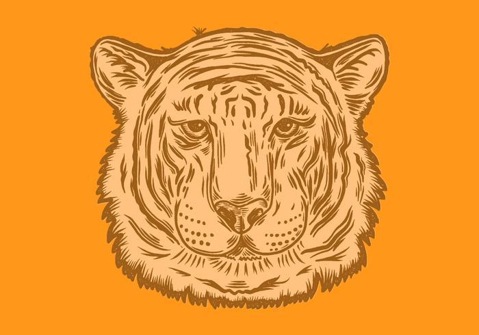 tiger huvud porträtt vektor