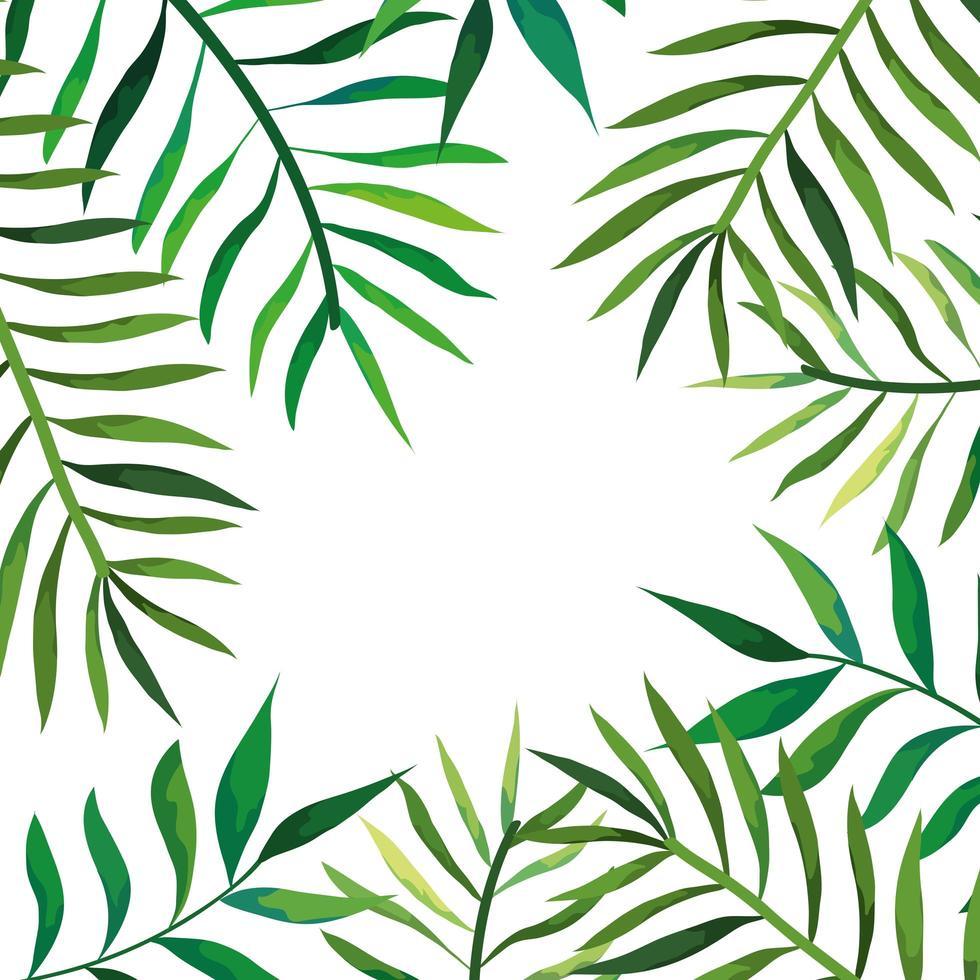 Rahmen von Zweigen mit Blättern isoliert Symbol vektor