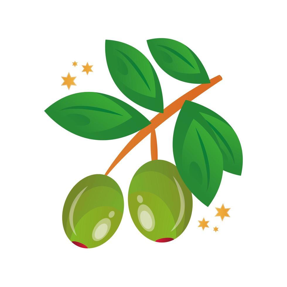 gren med olivfrön och blad vektor