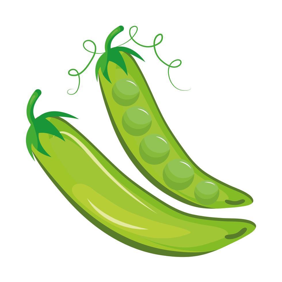 färska bönor grönsaker hälsosam mat ikon vektor