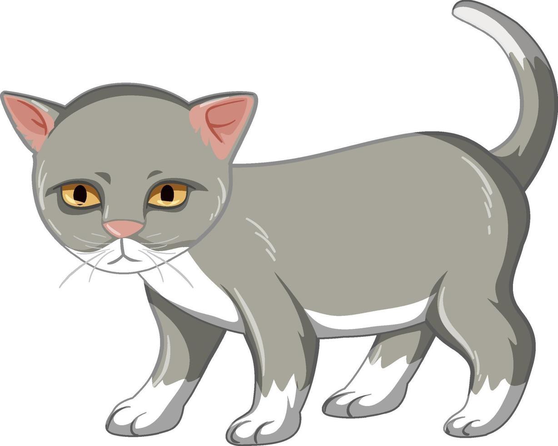 graues Kätzchen, das allein auf weißem Hintergrund steht vektor
