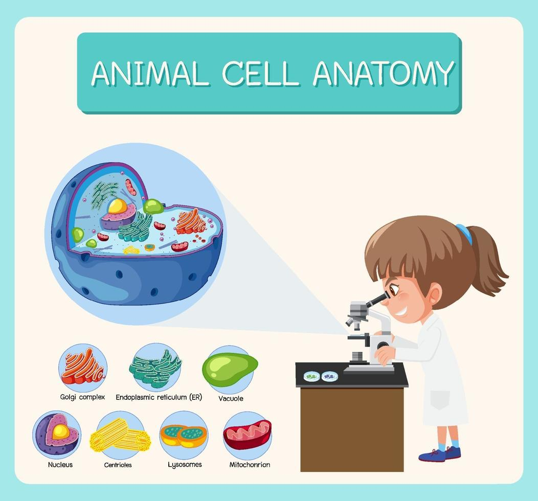 Anatomie des Tierzellbiologiediagramms vektor