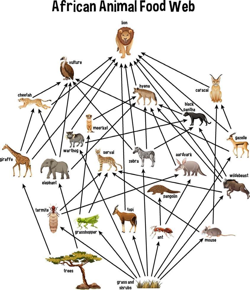 afrikanisches Tiernahrungsnetz auf weißem Hintergrund vektor