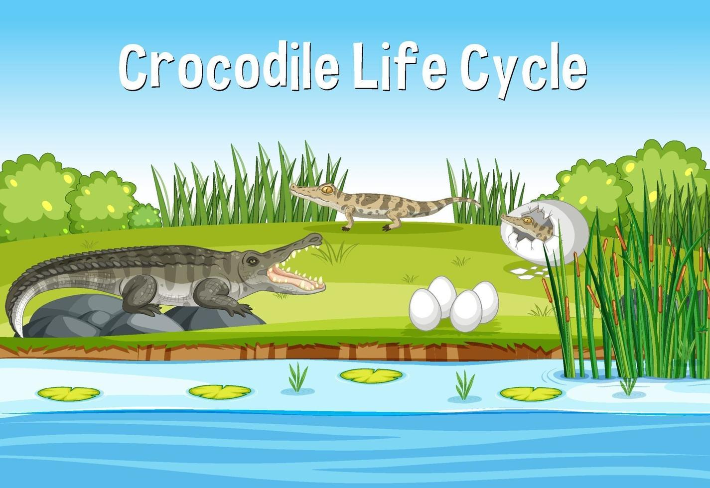scen med krokodins livscykel vektor