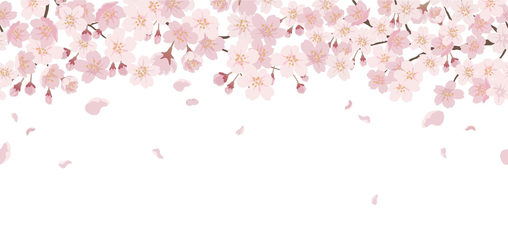 sömlös blommig bakgrund med körsbärsblommor i full blom isolerad på en vit bakgrund. kan repeteras horisontellt. vektor