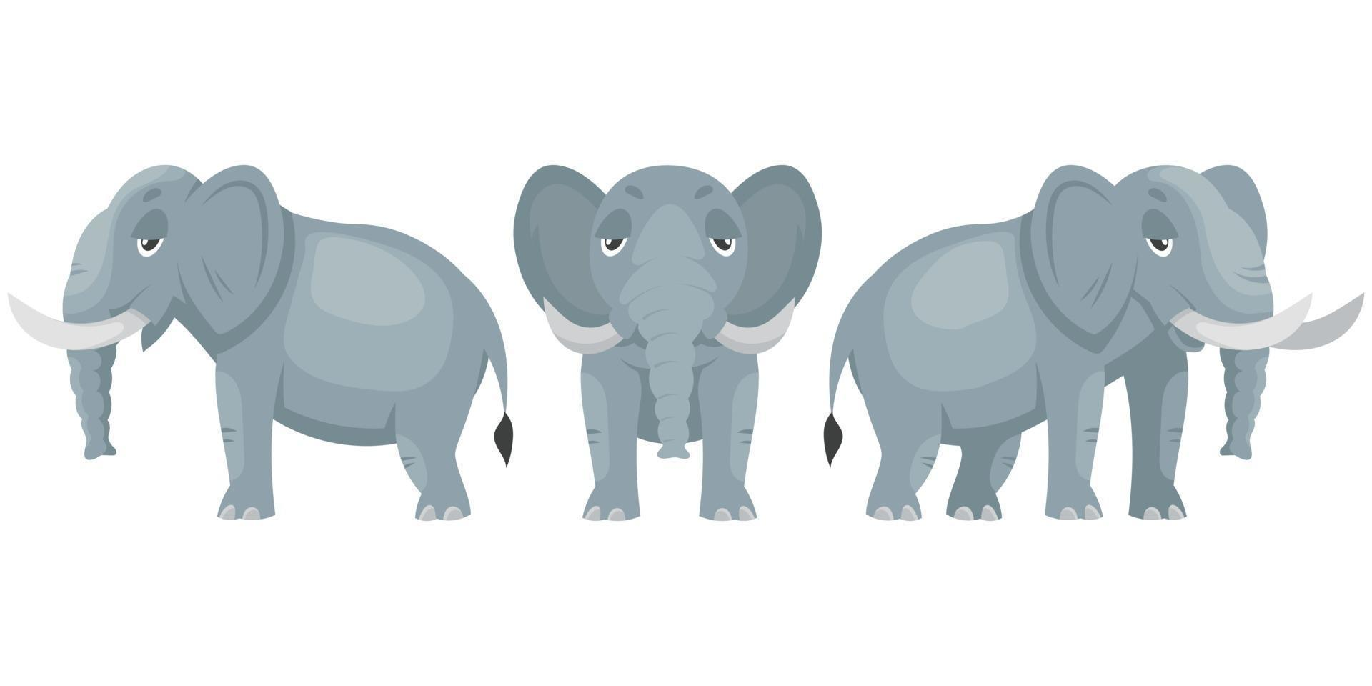 elefant i olika vinklar. vektor