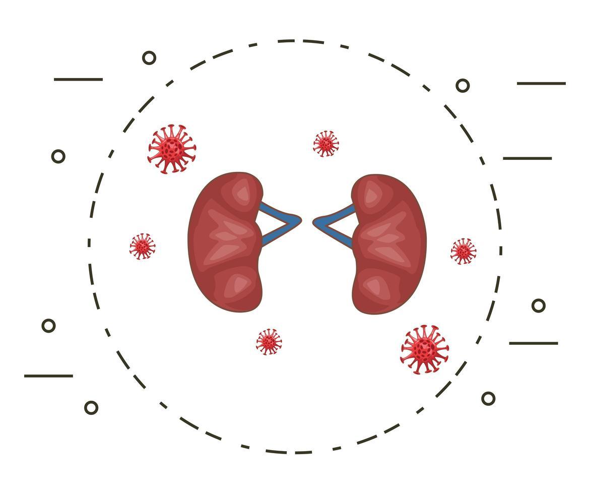 mänskliga njurar med bakterie vektor