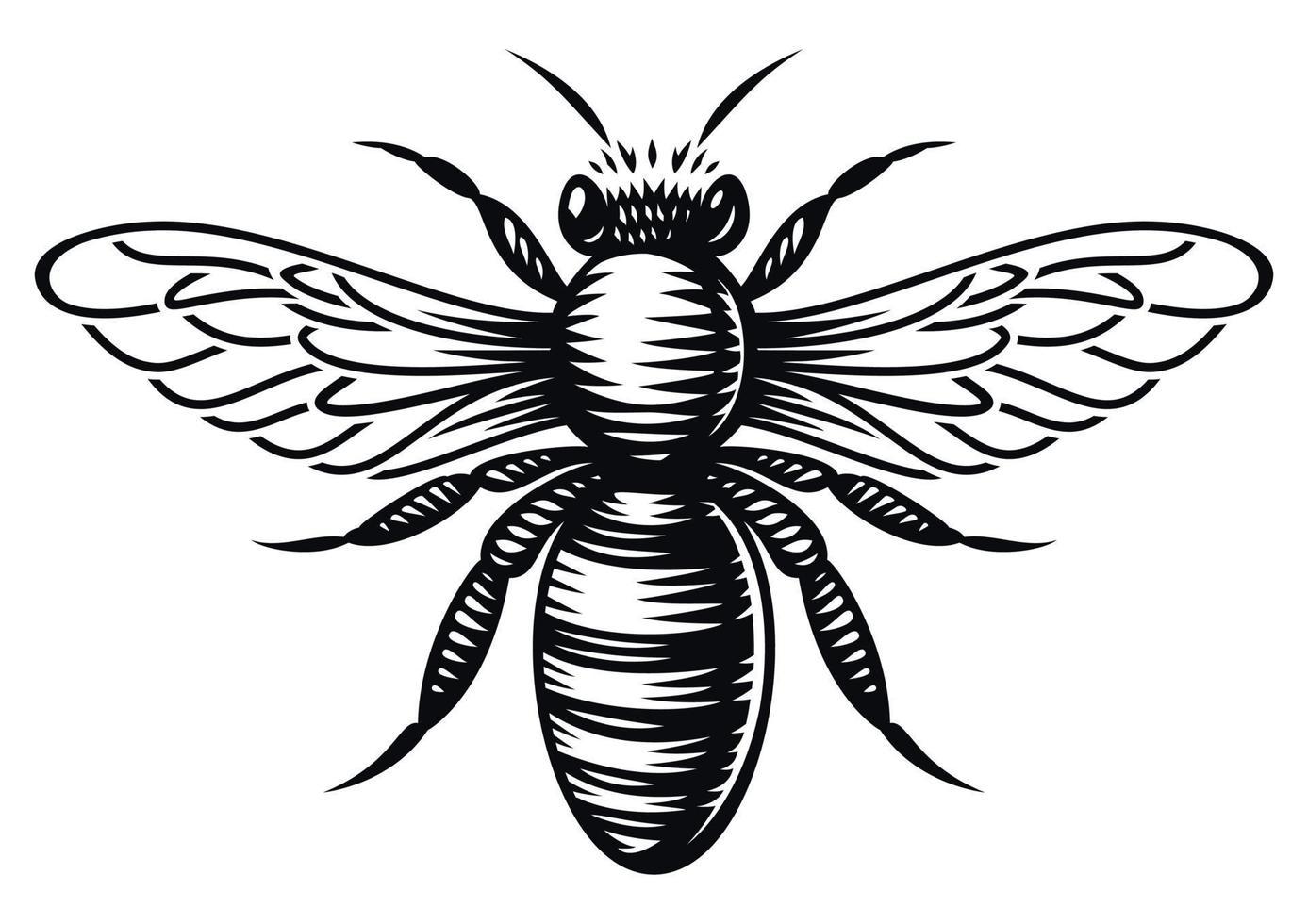 Schwarzweiss-Vektorhonigbiene im Gravurstil auf weißem Hintergrund vektor