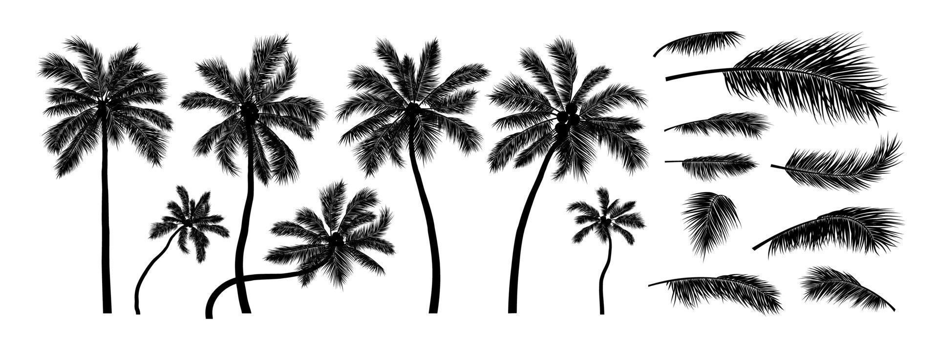 Silhouette Kokosnussbaum auf weißem Hintergrund Vektor-Illustration vektor