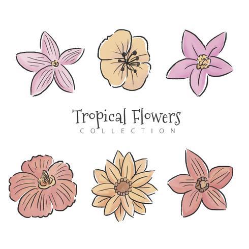 Tropiska blommor Set Collection vektor