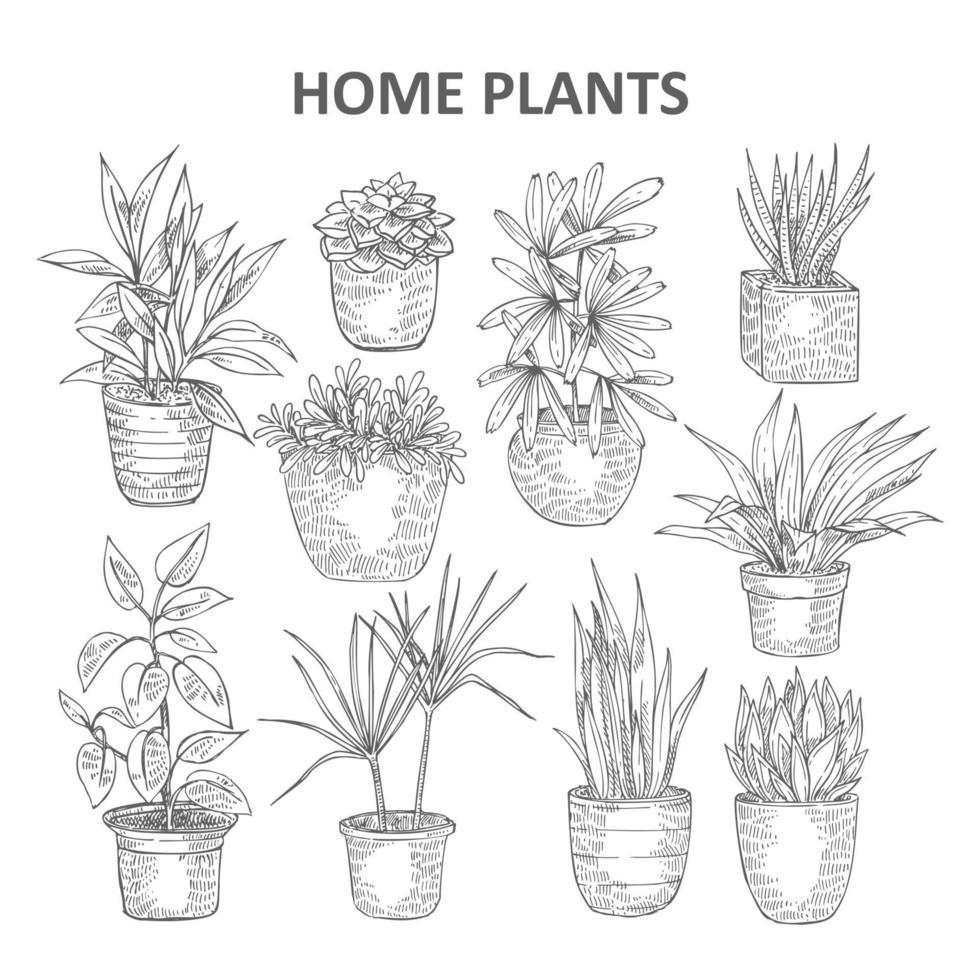 handgezeichnete heimische Pflanzen vektor