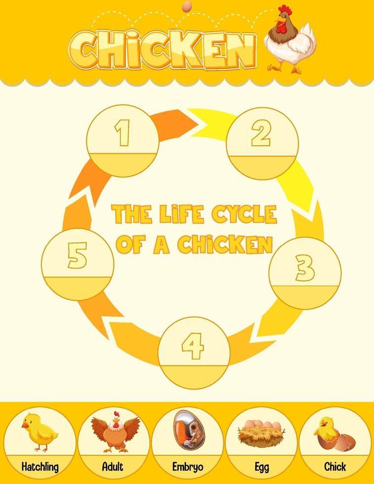 diagram som visar livscykel för kyckling vektor