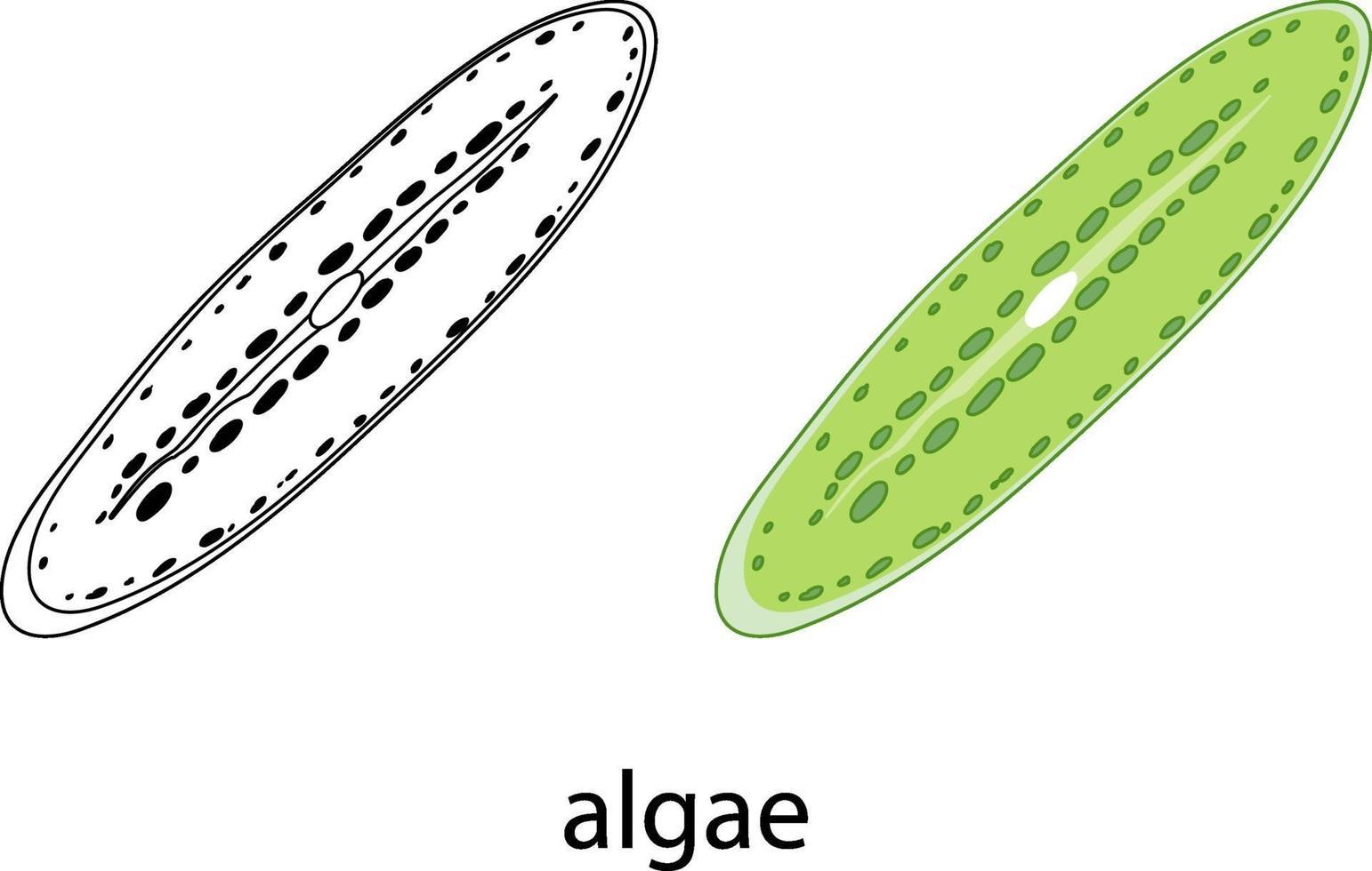 alger i färg och klotter på vit bakgrund vektor
