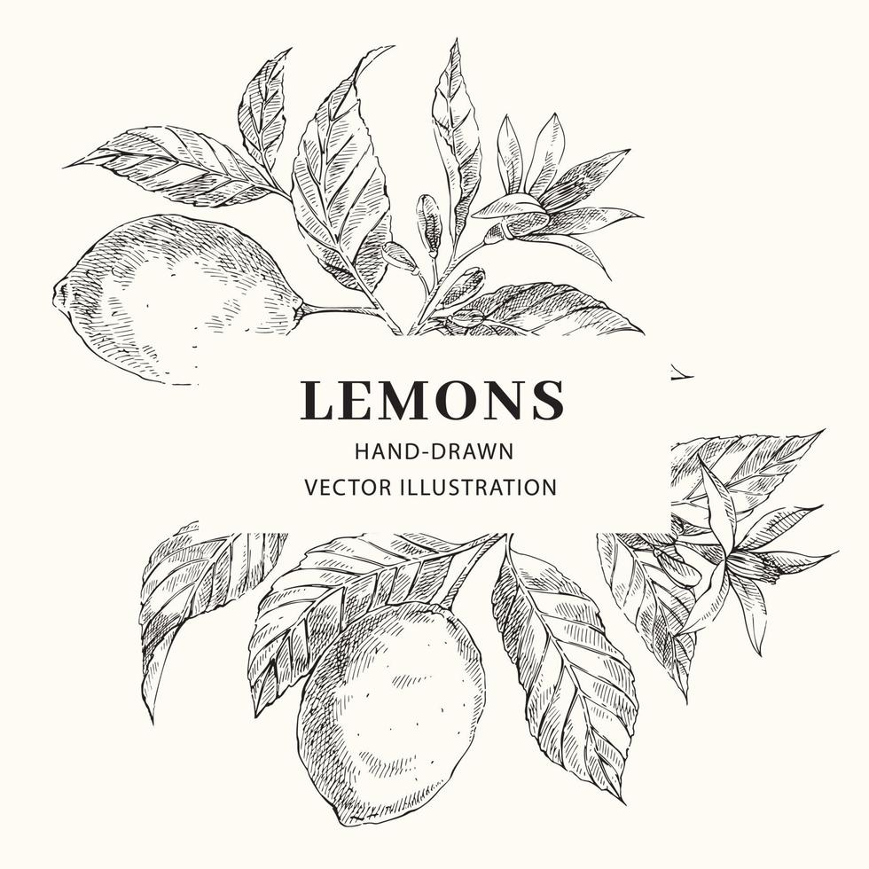 citron hand dras vektor ram layout