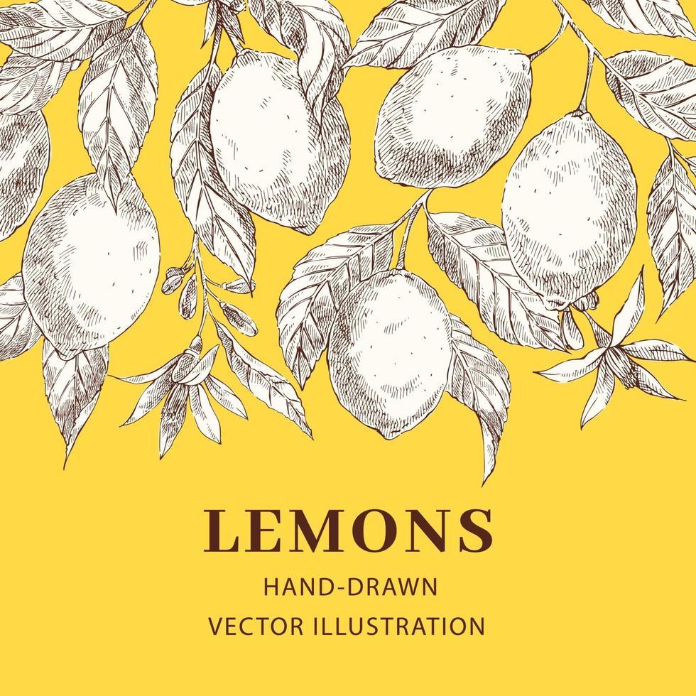 citroner handritad skiss vektor affisch mall