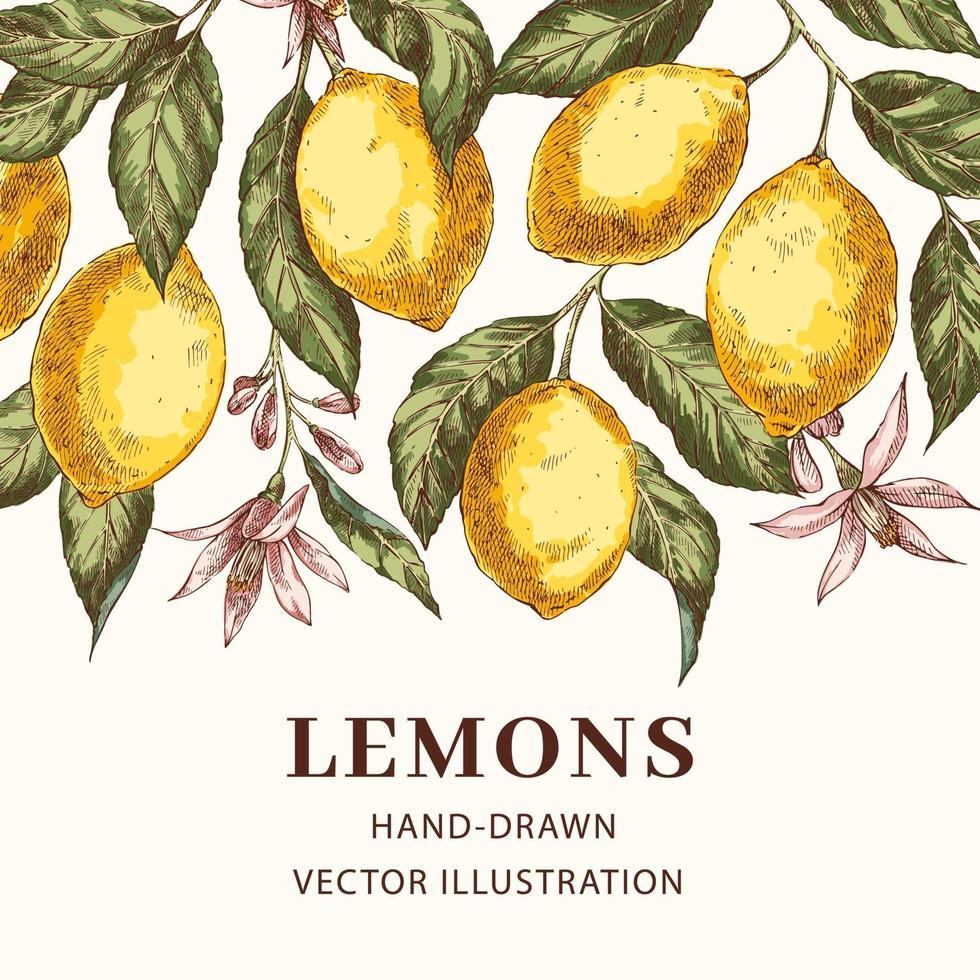 citroner handritad vektor affisch mall