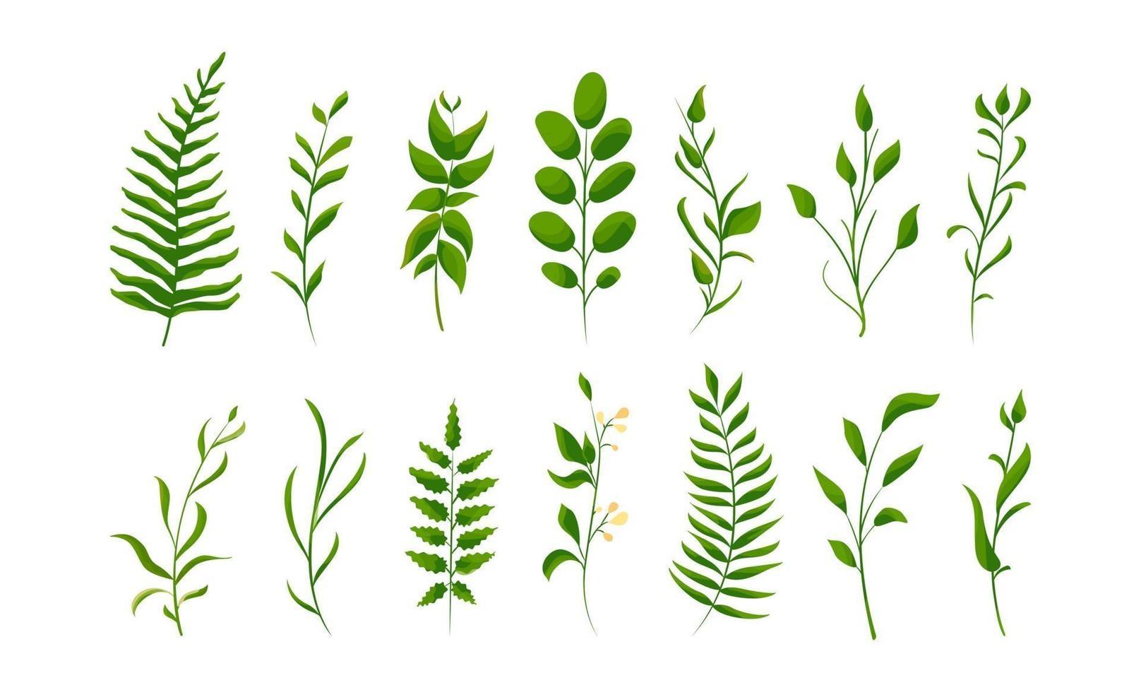 große Sammlung von grünem Waldfarn, tropisches Grün. isolierte natürliche Blätter. Birne, Aprikose, Maulbeere, Walnuss, Pflaume vektor