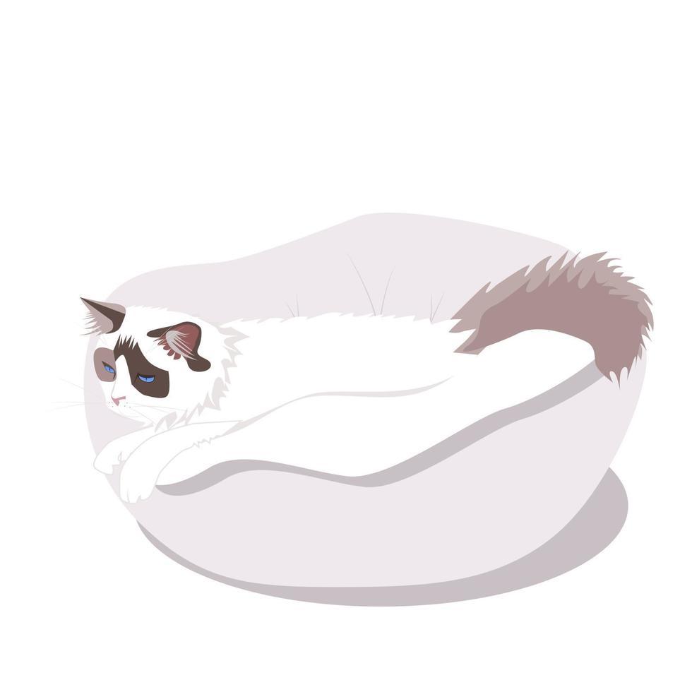 siamesisk fluffig katt på sängen vektor