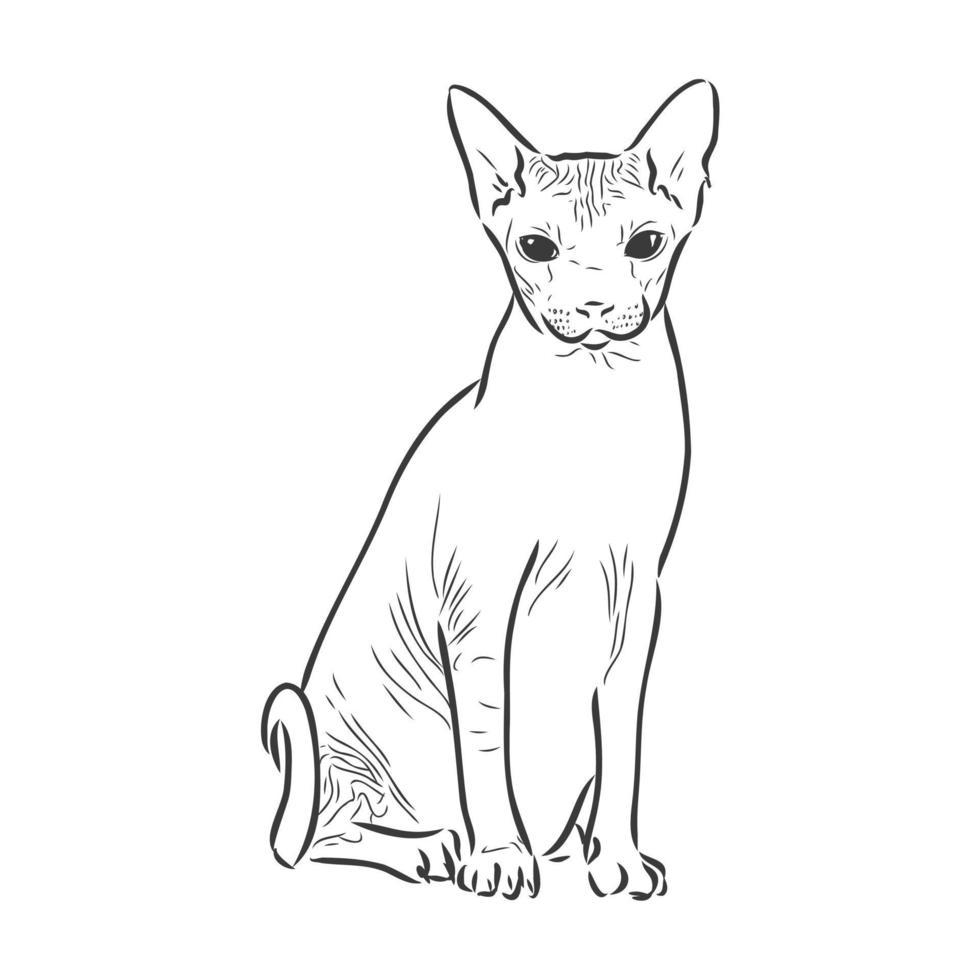 vektorillustration av en sphynx-katt med en liner isolerad på en vit bakgrund. för utskrift på kläder, papper, logotyp, ikon, tomt för designers t-shirts, tallrikar, säng vektor