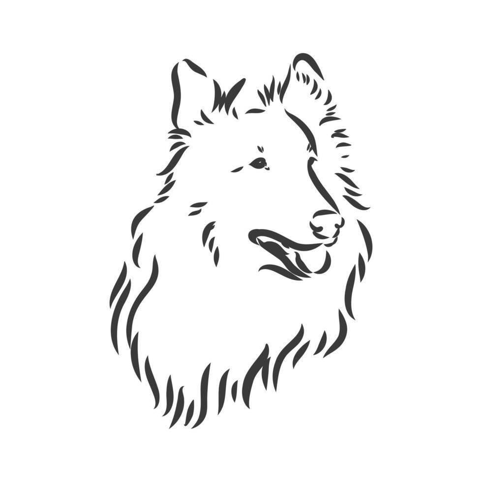 hund grov collie isolerad på vit bakgrund. vektor illustration. collie vektor skiss illustration på vit bakgrund