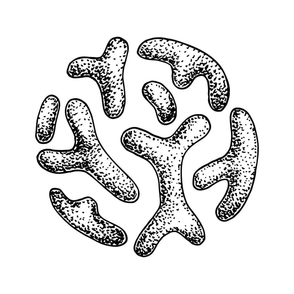 handritade probiotiska bifidobacterium-bakterier. bra mikroorganism för människors hälsa och matsmältningsreglering. vektor illustration i skiss stil