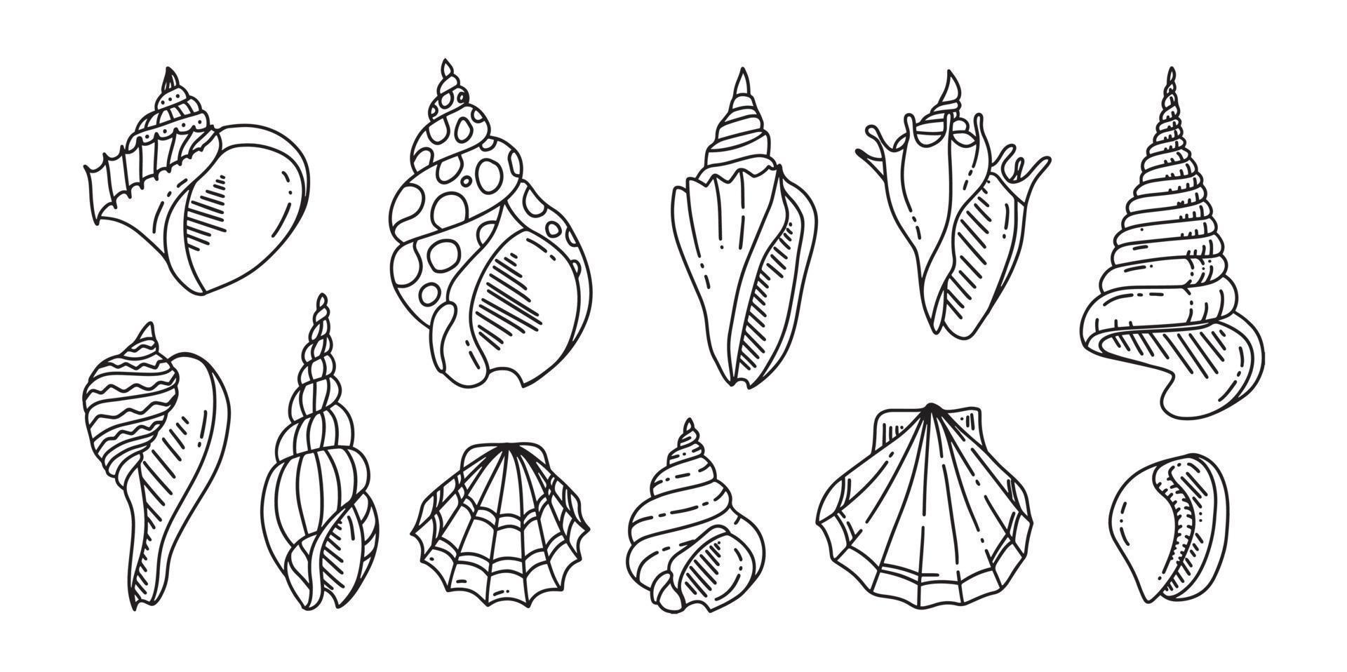 doodle uppsättning havsskal. olika skal i konturer. ritad för hand. vektor