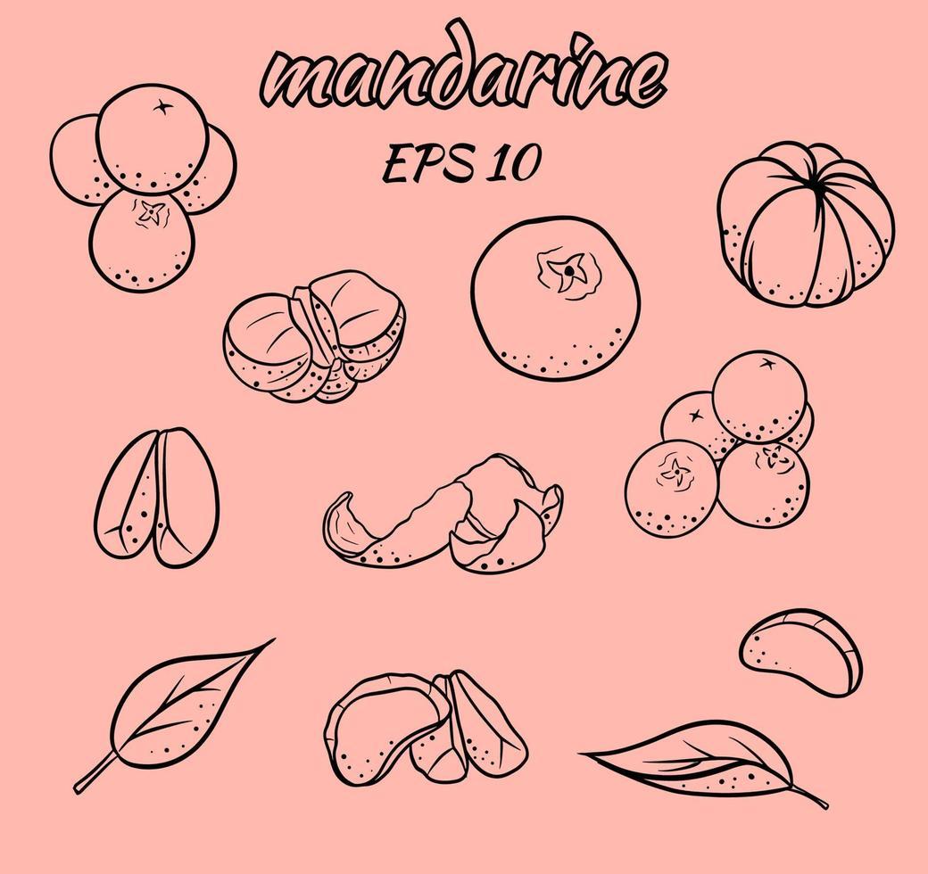 uppsättning vektorillustrationer av mandariner. vektor