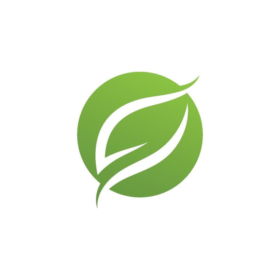 grünes Blattvektorillustrationsdesign der Ökologieikone vektor