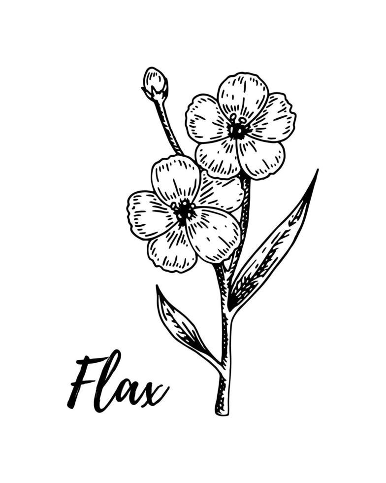 handgezeichneter Flachszweig mit Blumen. Vektorillustration im Skizzenstil für Leinensamen und Ölverpackung vektor