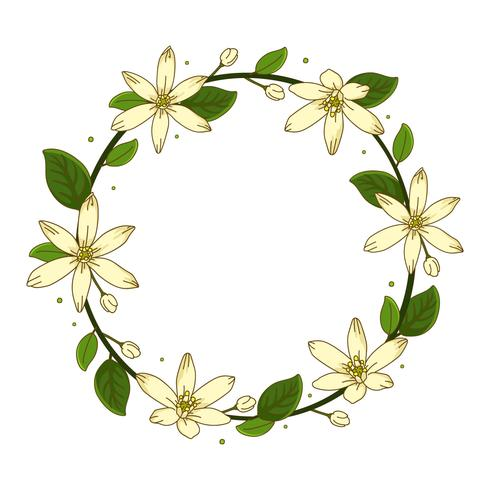 krans jasmin blomma bakgrund illustration vektor