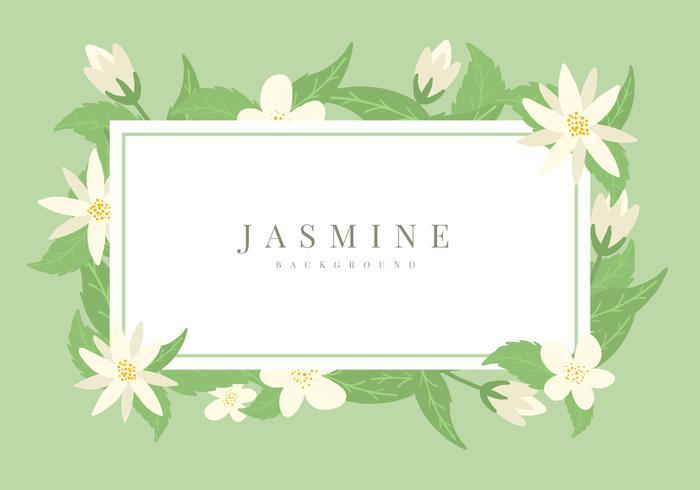 Jasmine Vector Bakgrund