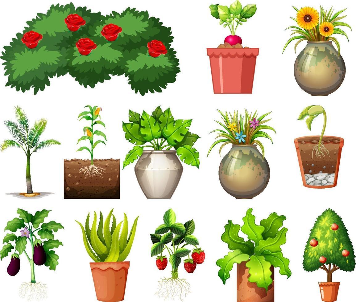 Satz von verschiedenen Pflanzen in Töpfen isoliert auf weißem Hintergrund vektor