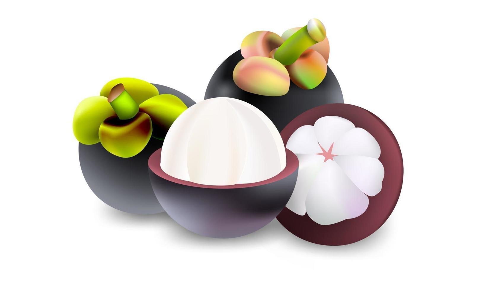 färsk mangostan frukt vektor