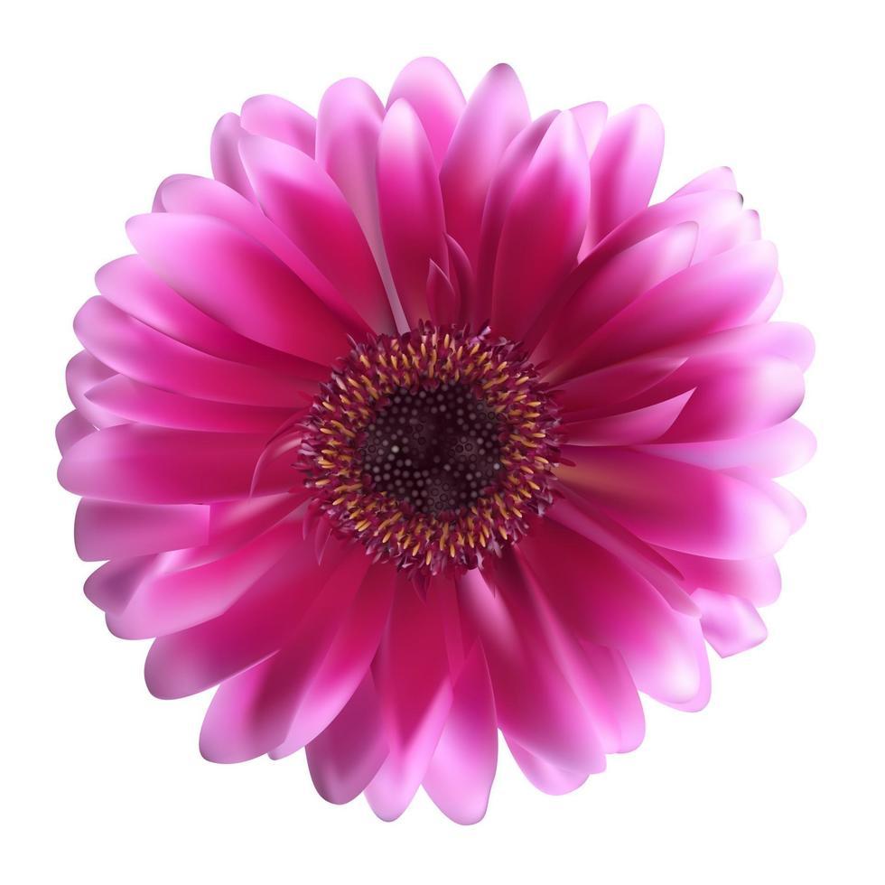 Gerbera-Blumenhintergrundvektorillustration vektor
