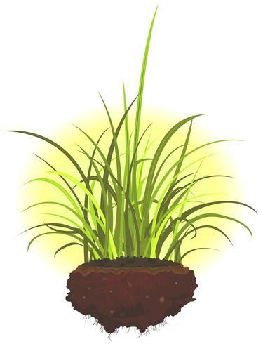 Grasblätter und Wurzeln vektor
