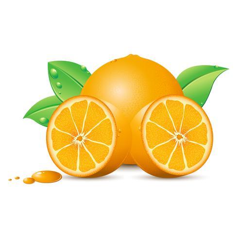 Frische Orange vektor
