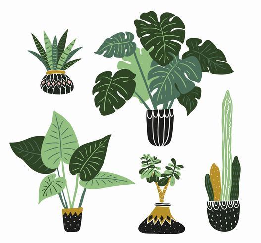 Hand gezeichnete tropische Zimmerpflanzen des Vektors. vektor