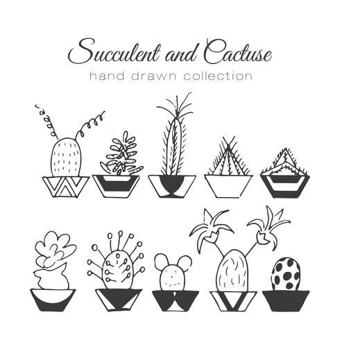 Hand gezeichnetes Succulent und Kakteen eingestellt vektor