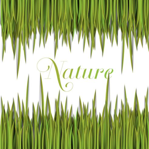 Natürliche grüne Schablone mit vektorgras. vektor