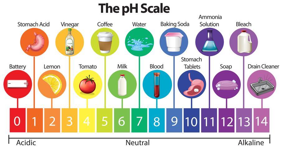 Vetenskapens pH-skala vektor