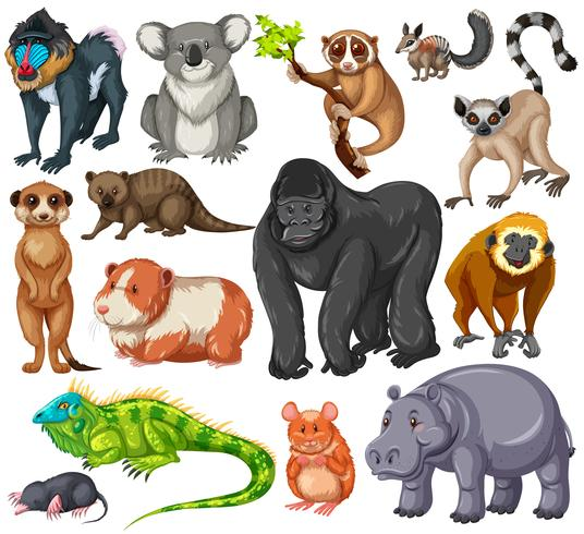 Olika typer av vilda djur på vit bakgrund vektor