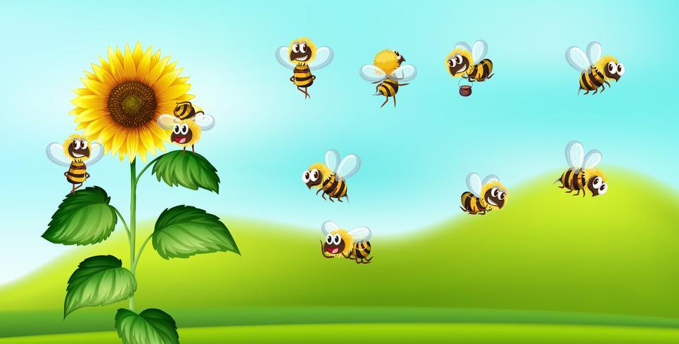 Bienen- und Sonnenblumennatur blackground vektor