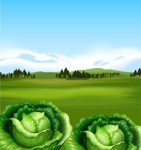Bio-Kohl mit schöner Landschaft vektor