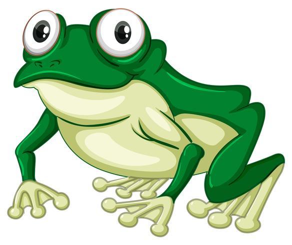 Grüner Frosch auf weißem Hintergrund vektor