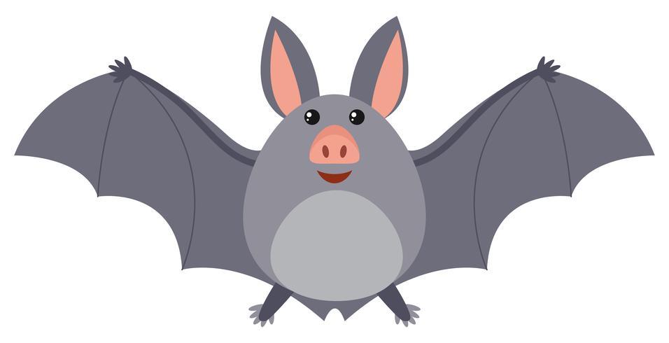 Bat med grå vingar vektor