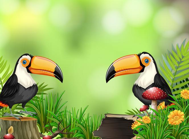 Toucan i naturen bakgrund vektor