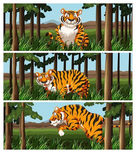 Wilder Tiger, der im Dschungel lebt vektor