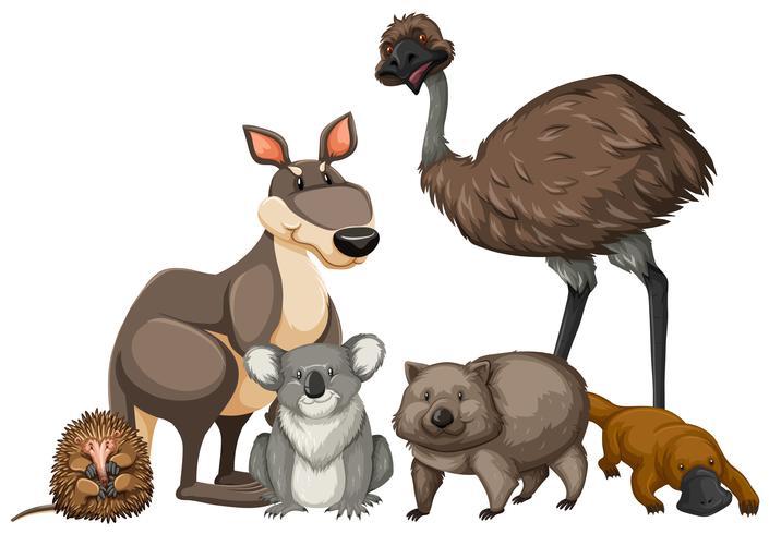 Vilda djur från Australien vektor