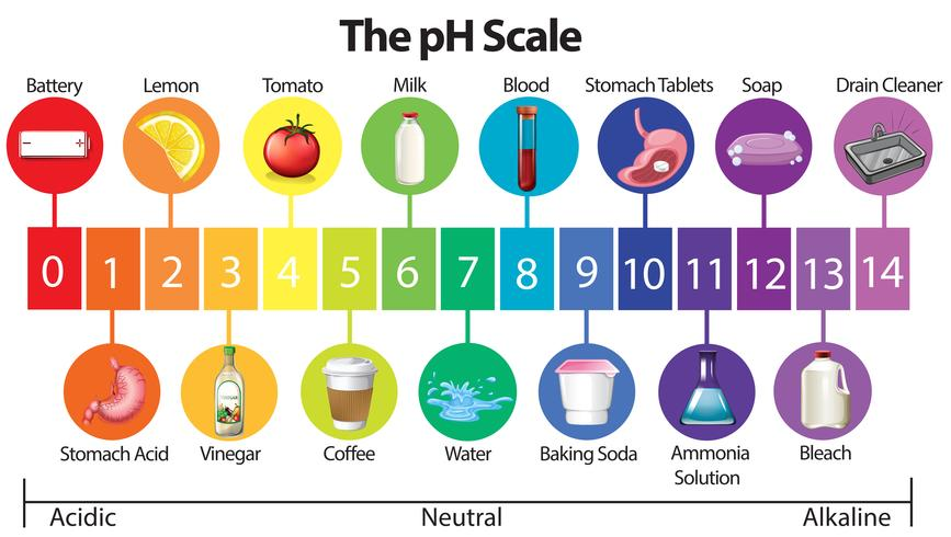 Ein Bildungsposter der pH-Skala vektor