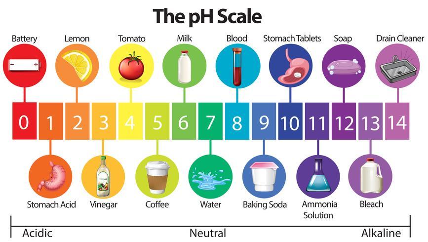 En utbildningsaffisch av pH-skalan vektor